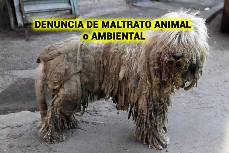 DENUNCIA DE MALTRATO ANIMAL o AMBIENTAL